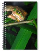 Green Eye'd Frog Spiral Notebook