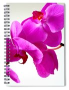 Green Field Sweetheart Orchid No 1 Spiral Notebook