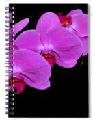 Green Field Sweetheart Orchid No 2 Spiral Notebook