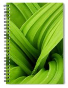 Green Folds Spiral Notebook