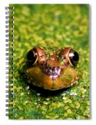 Green Frog Hiding Spiral Notebook