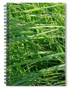 Green Grass Growing Spiral Notebook