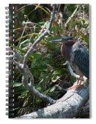 Green Heron 1 Spiral Notebook