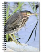 Green Heron 2 Spiral Notebook