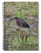 Green Heron Along Shore Spiral Notebook