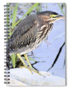 Green Heron Spiral Notebook
