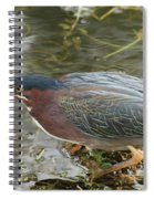 Green Heron On The Lookout Spiral Notebook