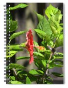 Green Hummingbird On Red Hibiscus Flower 2 Of 10 Spiral Notebook