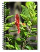 Green Hummingbird On Red Hibiscus Flower 5 Of 10 Spiral Notebook