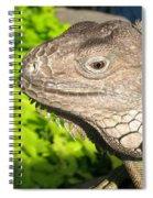 Green Iguana Face Spiral Notebook