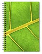 Green Leaf Close Up Spiral Notebook