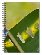 Green Leaves Series  5 Spiral Notebook