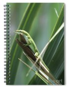 Green Lizard Spiral Notebook