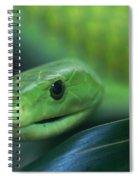 Green Mamba 2 Spiral Notebook
