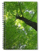 Green Maple Canopy Spiral Notebook