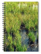 Green Natural Beauty Spiral Notebook