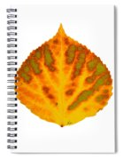 Green Orange Red And Yellow Aspen Leaf 1 Spiral Notebook