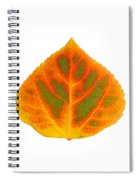 Green Orange Red And Yellow Aspen Leaf 5 Spiral Notebook