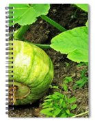 Green Pumpkin Spiral Notebook