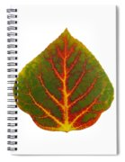 Green Red And Yellow Aspen Leaf 4 Spiral Notebook