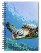 Green Sea Turtle - Maui Spiral Notebook