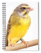 Green Singing Finch Crithagra Mozambicus Spiral Notebook