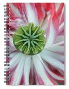 Green Star Spiral Notebook