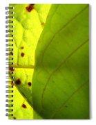 Green Sunlight Spiral Notebook