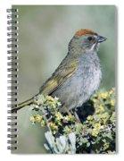 Green Towhee Spiral Notebook