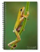 Green Tree Frog Climbing Spiral Notebook