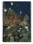 Hawksbill Turtle Spiral Notebook