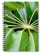 Green Umbrella Spiral Notebook