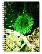 Green Urchin Spiral Notebook