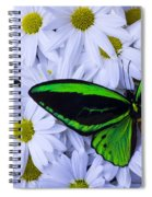 Green Wings In The Mums Spiral Notebook