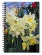 Greenhouse Daffodils Spiral Notebook