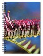 Grevillea Pink Australian Spiral Notebook