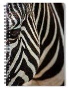 Grevy's Zebra 4 Spiral Notebook