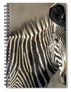 Grevys Zebra Standing In Plains Kenya Spiral Notebook
