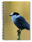 Grey Jay  Spiral Notebook