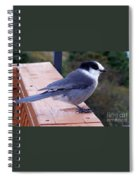 Grey Jay On A Rail Spiral Notebook