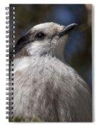 Grey Jay Spiral Notebook