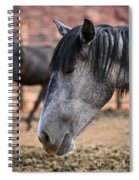 Grey Mare Spiral Notebook