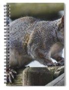 Grey Squirrel Spiral Notebook
