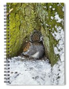Grey Squirrel With Its Food Store Spiral Notebook