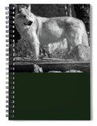 North American Wolf  Spiral Notebook