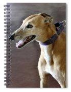 Greyhound Dog Spiral Notebook