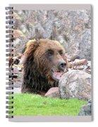 Grizzly Bear 02 Postcard Spiral Notebook