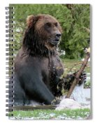 Grizzly Bear 6 Spiral Notebook