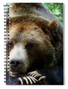 Grizzly Bear At Rest In Colorado Wildneress Spiral Notebook