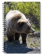 Grizzly Bear Spiral Notebook